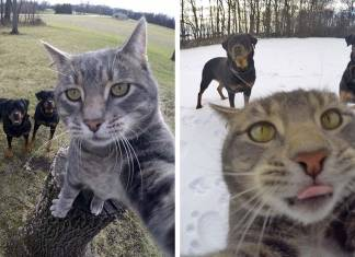 Şans eseri selfie çekmeyi öğrenen Kedi Manny internet fenomeni oldu