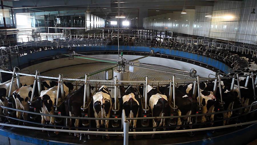 Sut Endustrisi 3  Süt endüstrisinin bilmenizi istemediği 10 önemli gerçek Sut Endustrisi 3