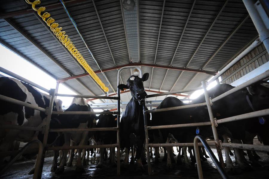Sut Endustrisi 4  Süt endüstrisinin bilmenizi istemediği 10 önemli gerçek Sut Endustrisi 4