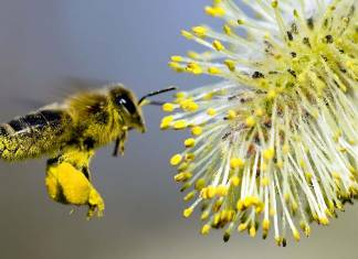 Dünya üzerindeki tüm arılar ölür ise insanlara ne olur?