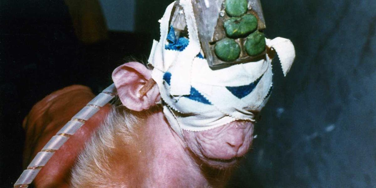 Sakarya Üniversitesi'nde hayvanlar tıbbi deneyler için kullanılacak