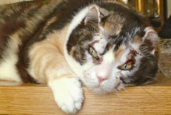 kedi,scarlett1