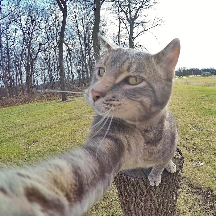 manny Şans eseri selfie çekmeyi öğrenen Kedi Manny internet fenomeni oldu