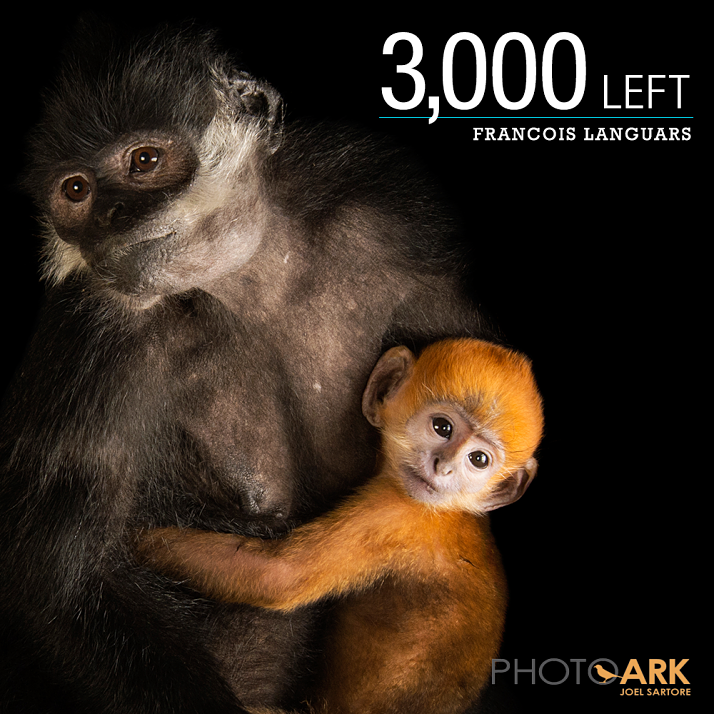 nesli tükenmekte olan hayvanların fotoğraflanması
