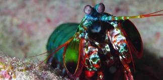 Photoshop ile renklendirilmiş gibi görünen 15 renkli hayvan