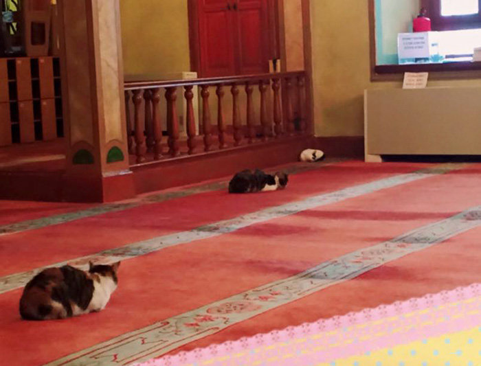 stray-cats-mosque-aziz-mahmud-hudayi-mustafa-efe-istanbul-turkey-2