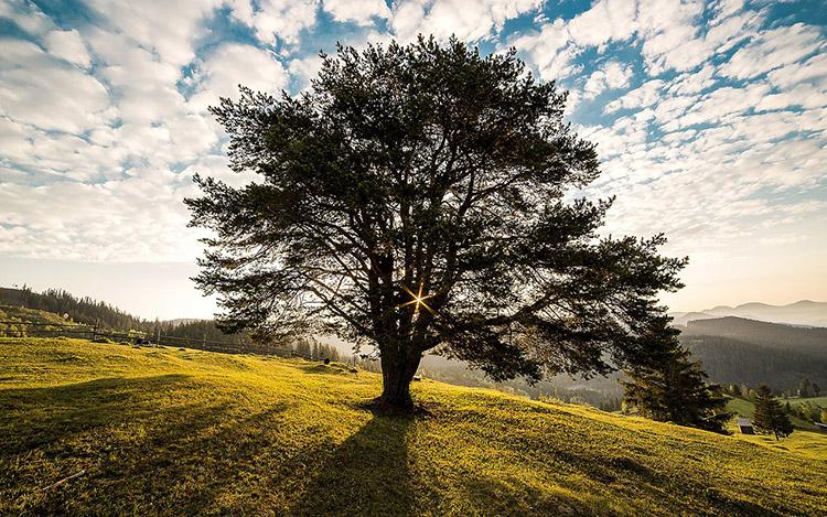 2_hugging-trees-is-good-for-you  Ağaca sarıl, ayıyı öp! 2 hugging trees is good for you