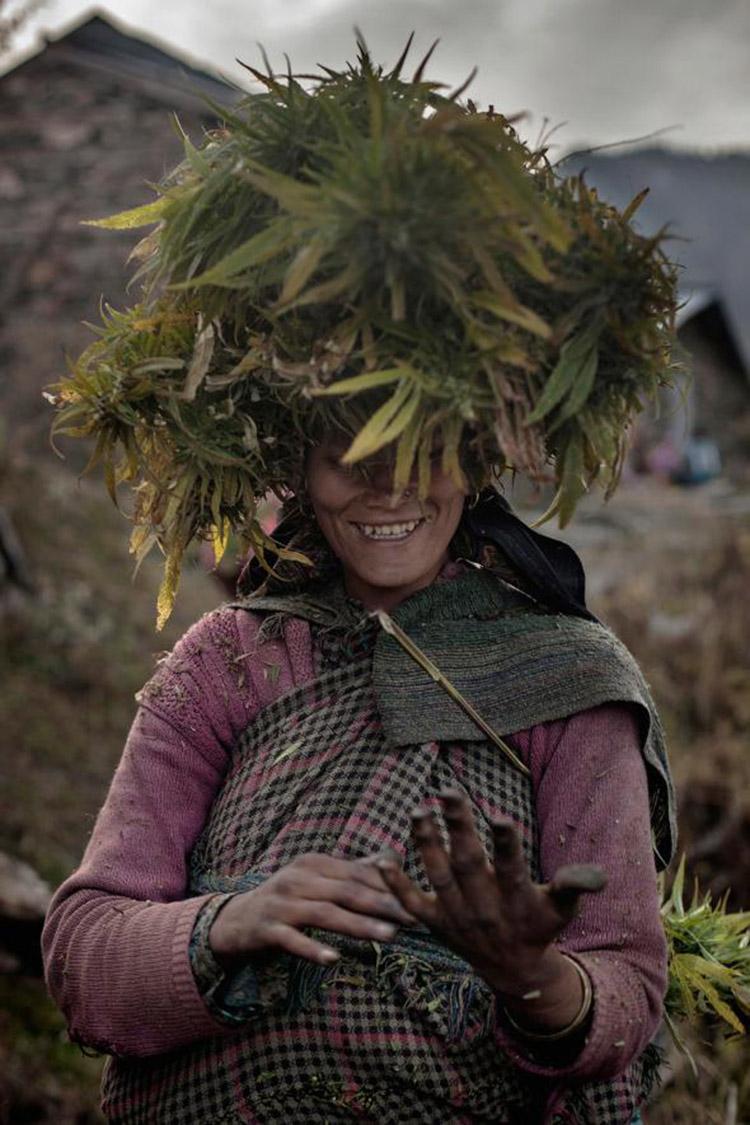 3_Himalayan-cannabis-village