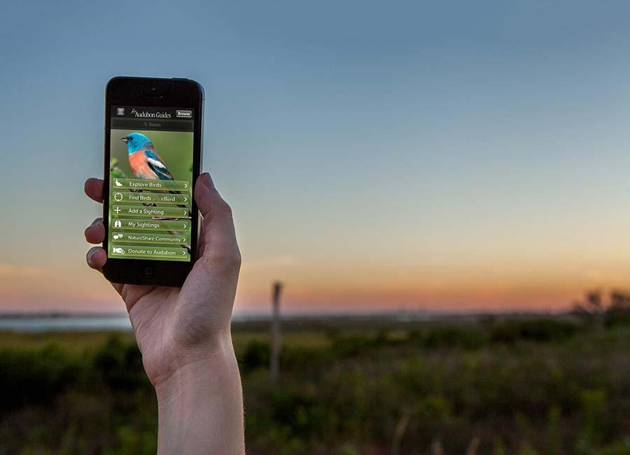 Audubon Owls app