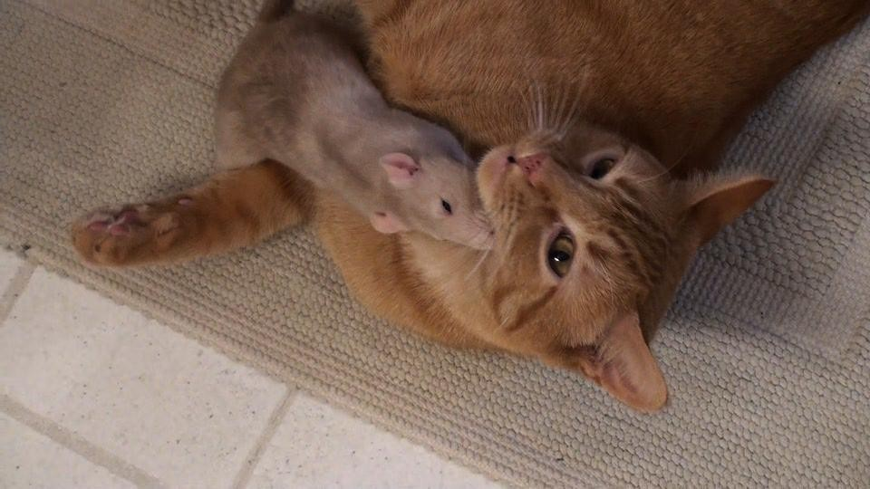 Fare ve Kedi 2