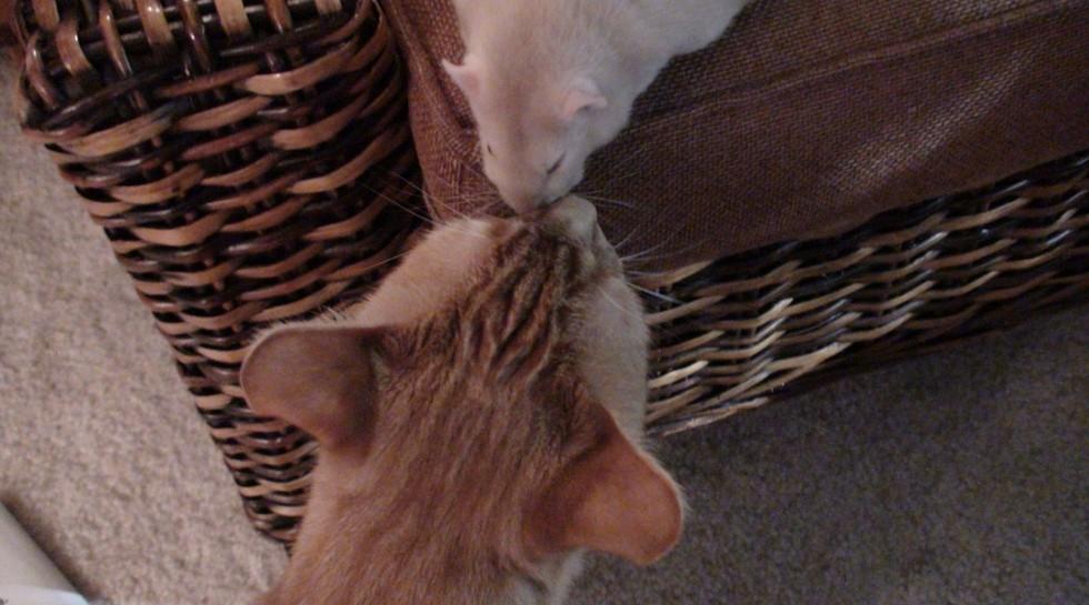 Fare ve Kedi 4