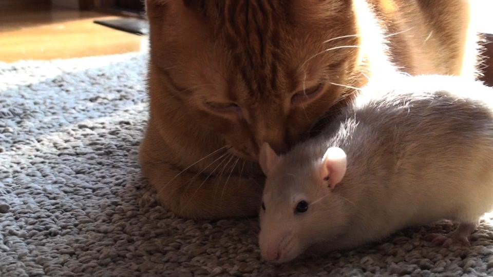 Fare ve Kedi 5