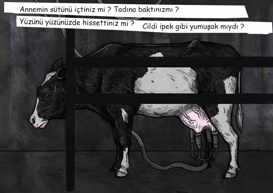 Weronika Kolinska, sut 3