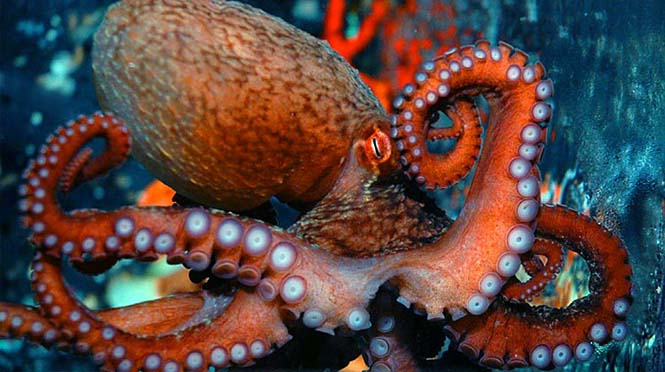 Kaynak: Vancouver Aquarium