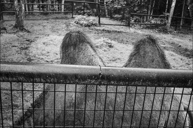 hayvanat bahçesi 5