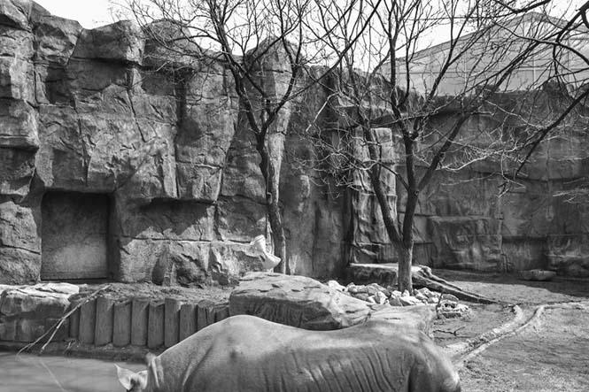 hayvanat bahçesi 6