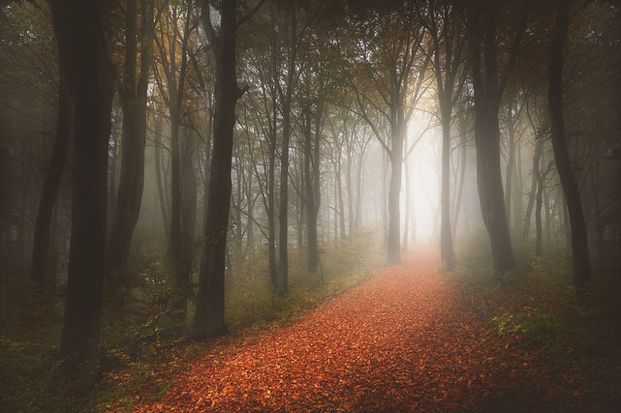i-create-stories-of-the-forests-11__880