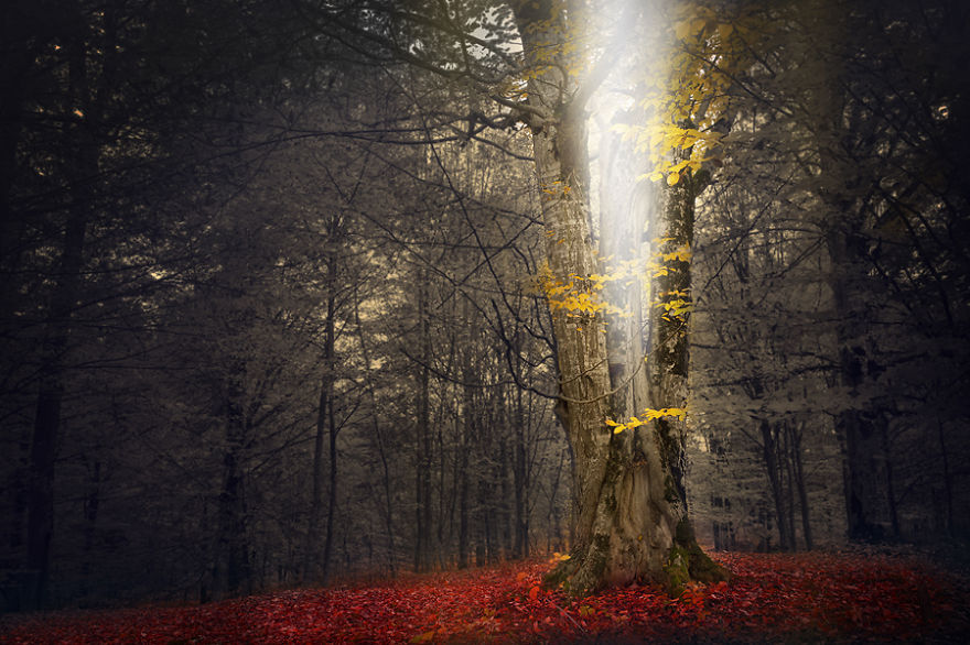 i-create-stories-of-the-forests-13__880