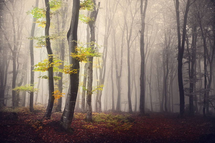 i-create-stories-of-the-forests-3__880