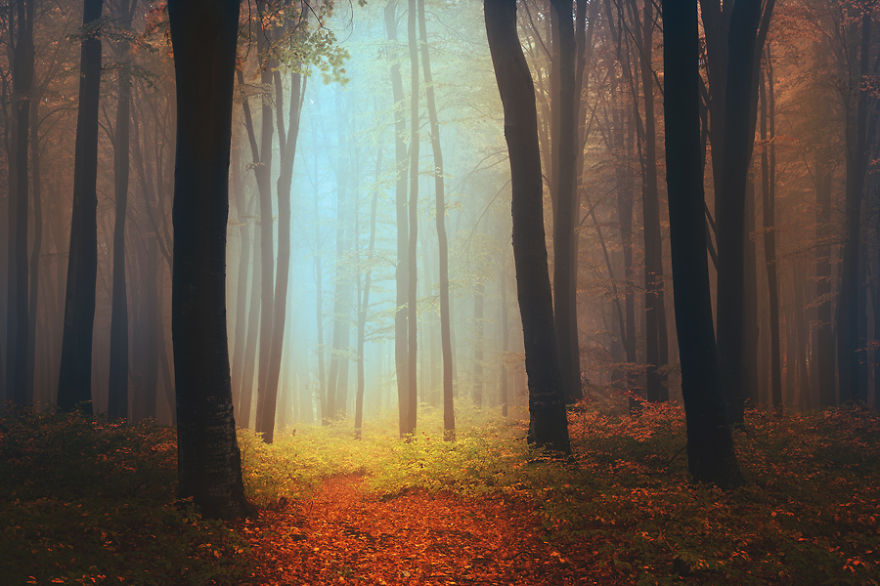 i-create-stories-of-the-forests-4__880