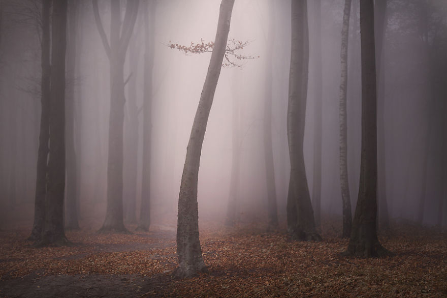 i-create-stories-of-the-forests-6__880