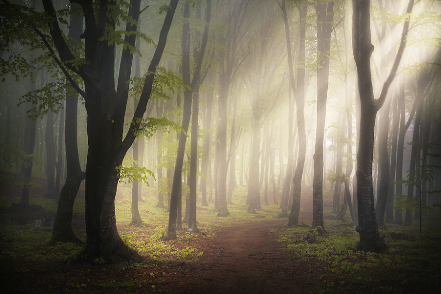 i-create-stories-of-the-forests-7__880