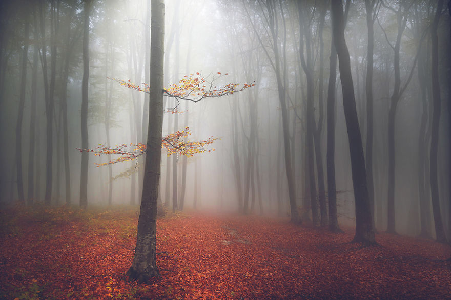 i-create-stories-of-the-forests-8__880