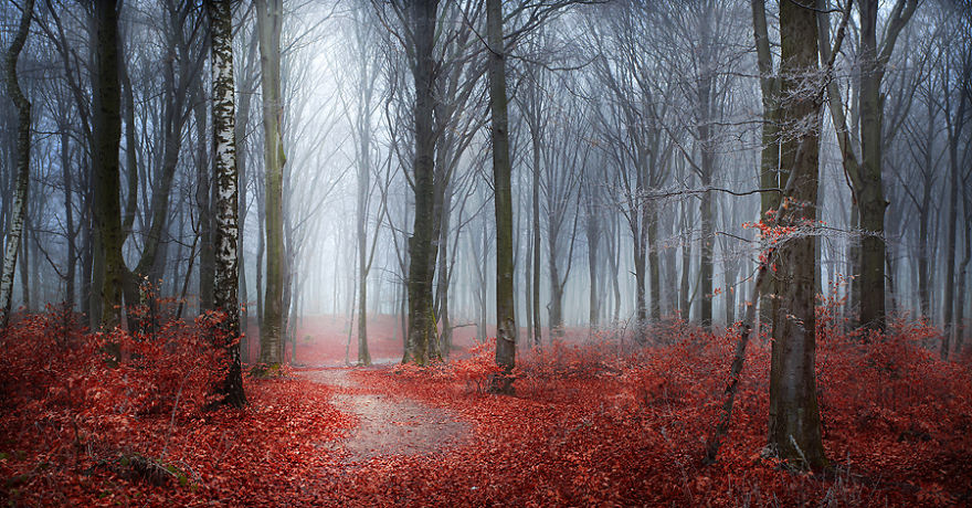 i-create-stories-of-the-forests__880