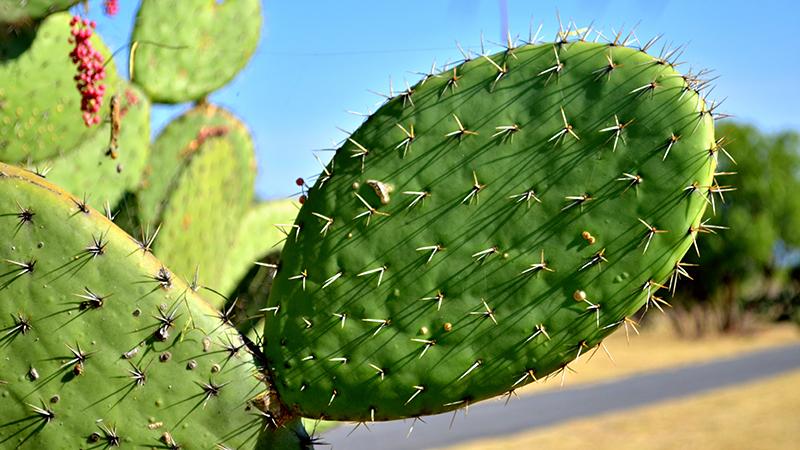 kaktus santrali 3
