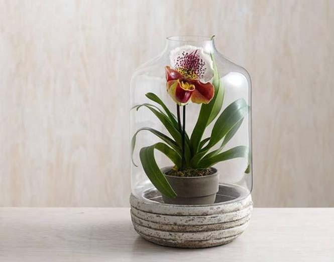 kavanozda orkide
