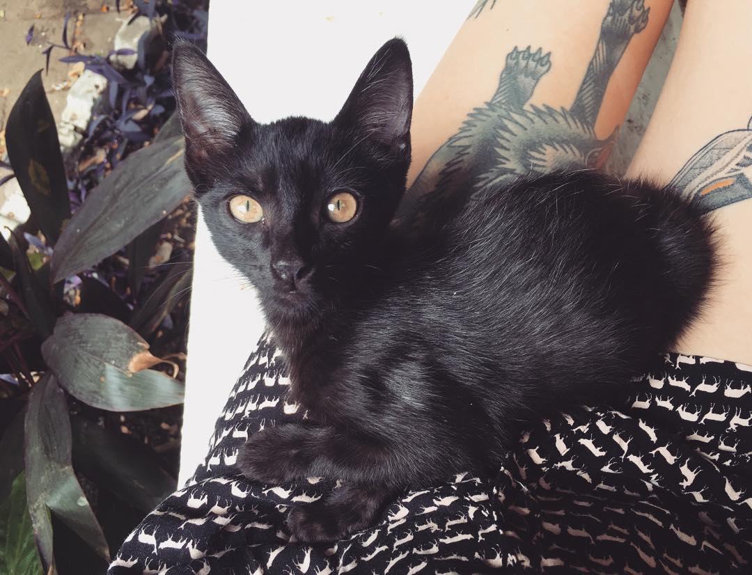 kittenlady 3