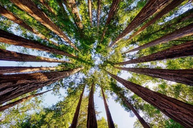 orman ağaçları 1