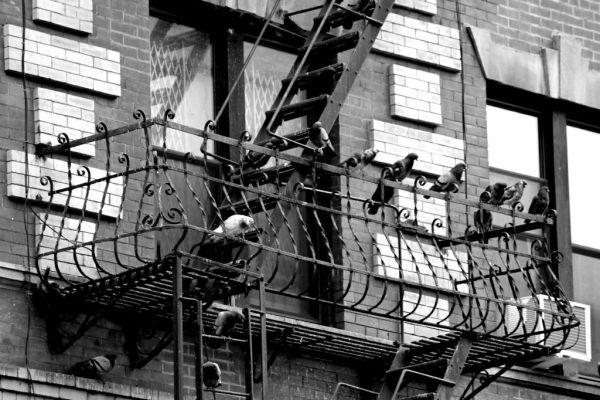 4. anna connelly - fire escape