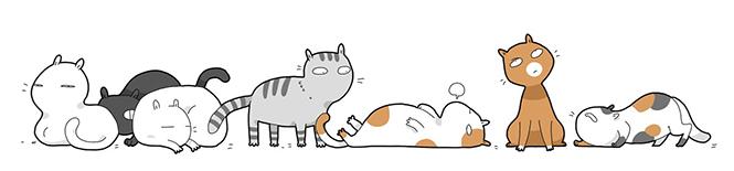 kedi miriltisinin tedavi edici gucu1
