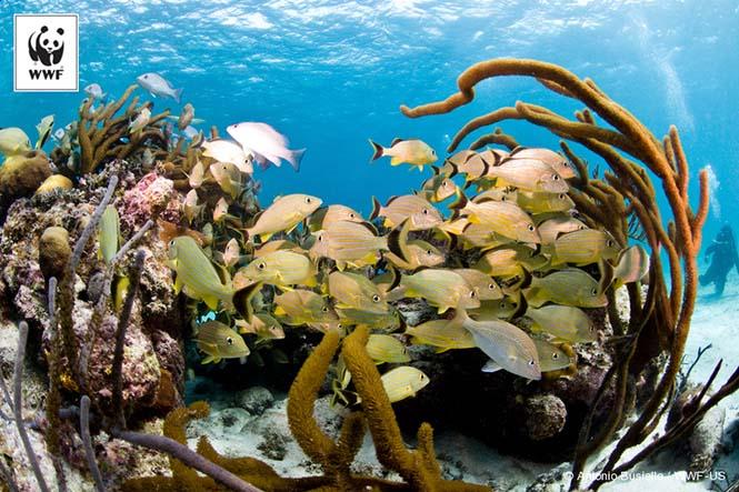 Beliz'deki mercan resifleri