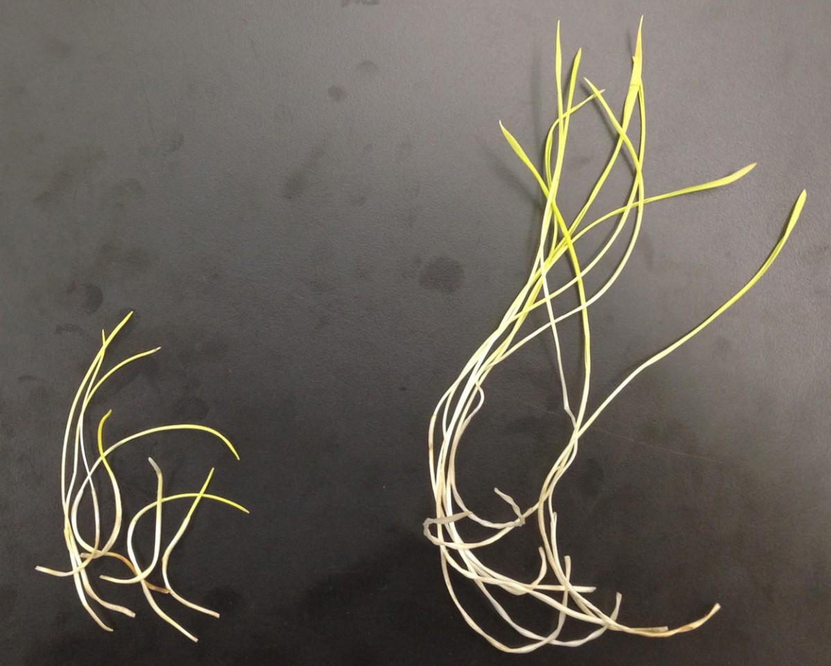probiotics-for-plants3