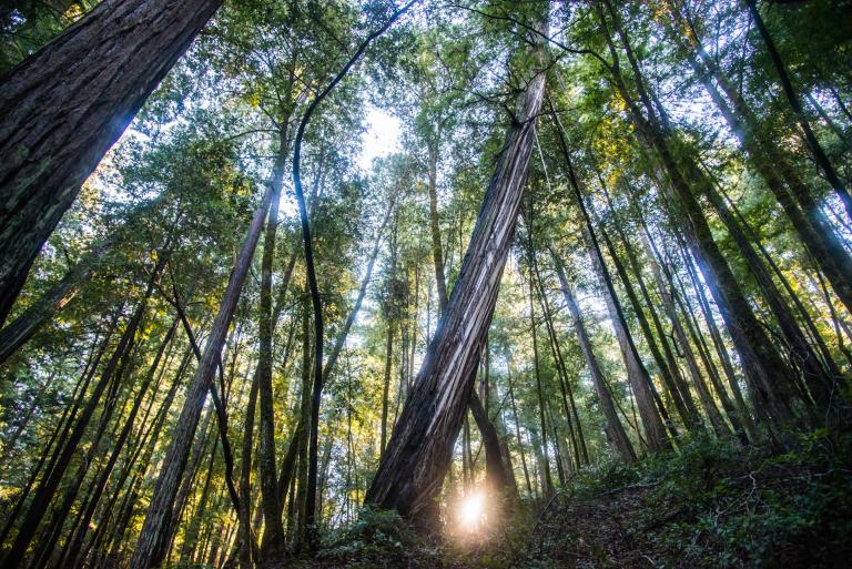 Montgomery Woods - Kaliforniya, Amerika