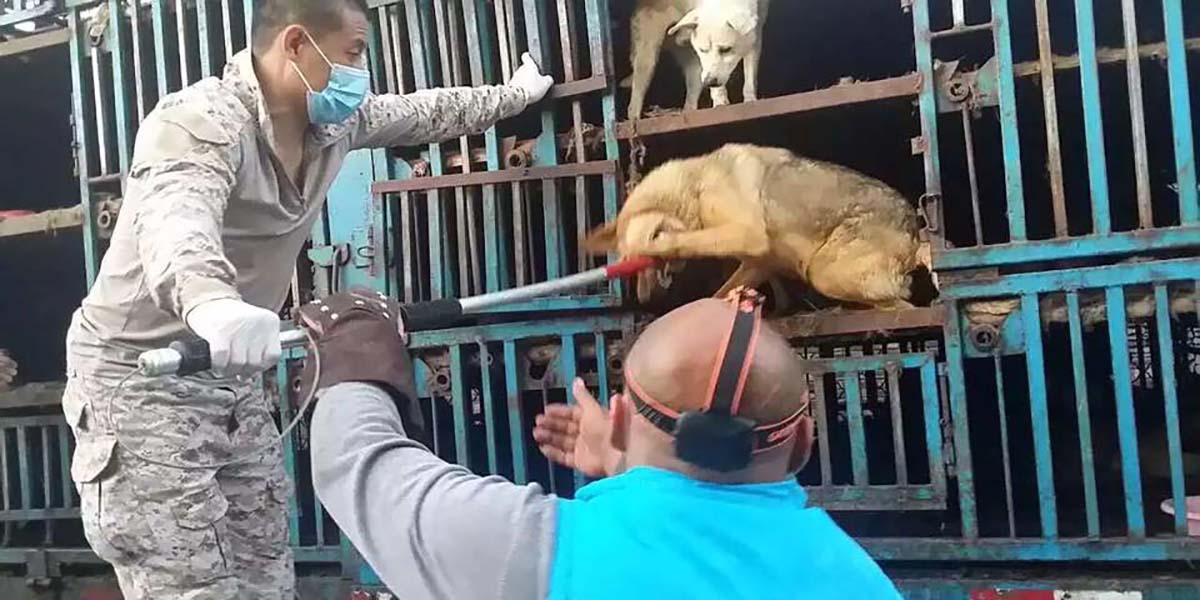 Çinli aktivistler köpekleri kurtardı
