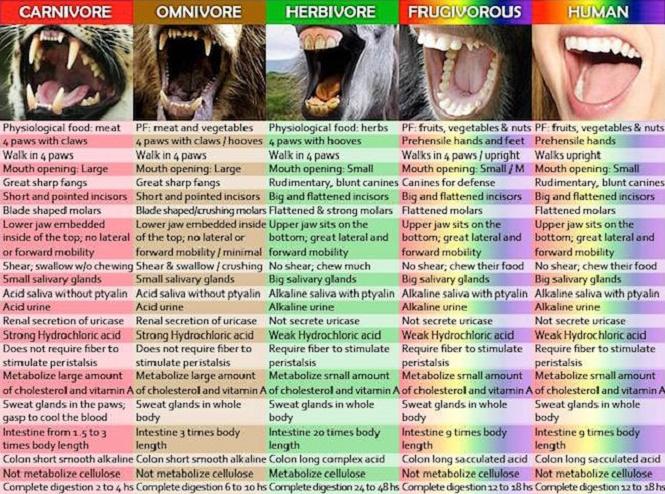 Vegan olmak için 12 önemli neden