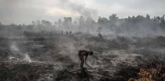 Ormanlarımız hepimizin akciğerleri
