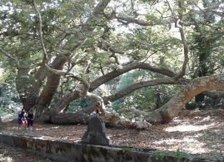 Vegan koşuculara öneri: Kayıp orman koşuları