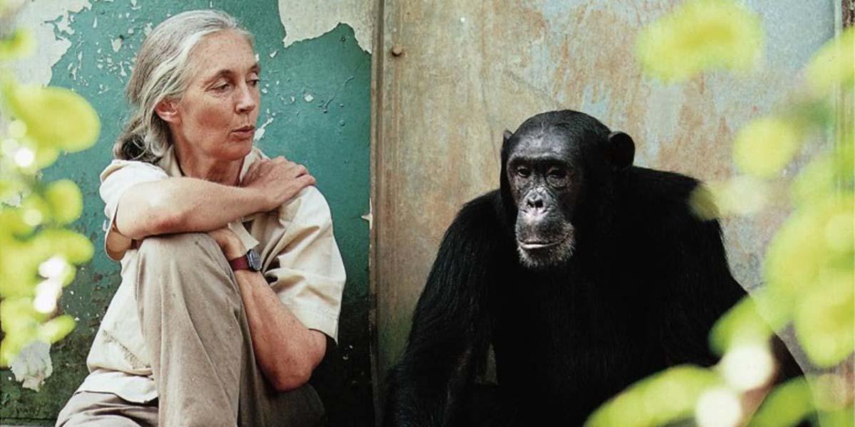 Primatlarla ilgili algımızı sonsuza kadar değiştirecek ilham verici 3 kadınla tanışınPrimatlarla ilgili algımızı sonsuza kadar değiştirecek ilham verici 3 kadınla tanışın