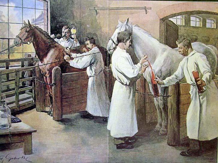 veteriner-hekim-tarihi-1