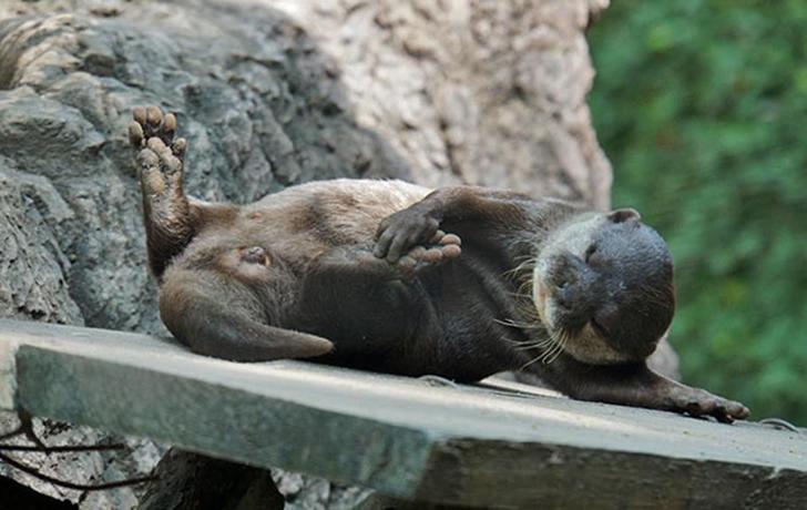 Birbirinden sevimli hayvanlardan yoga pozisyonlari_ 100
