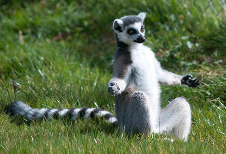 Birbirinden sevimli hayvanlardan yoga pozisyonlari_ 20