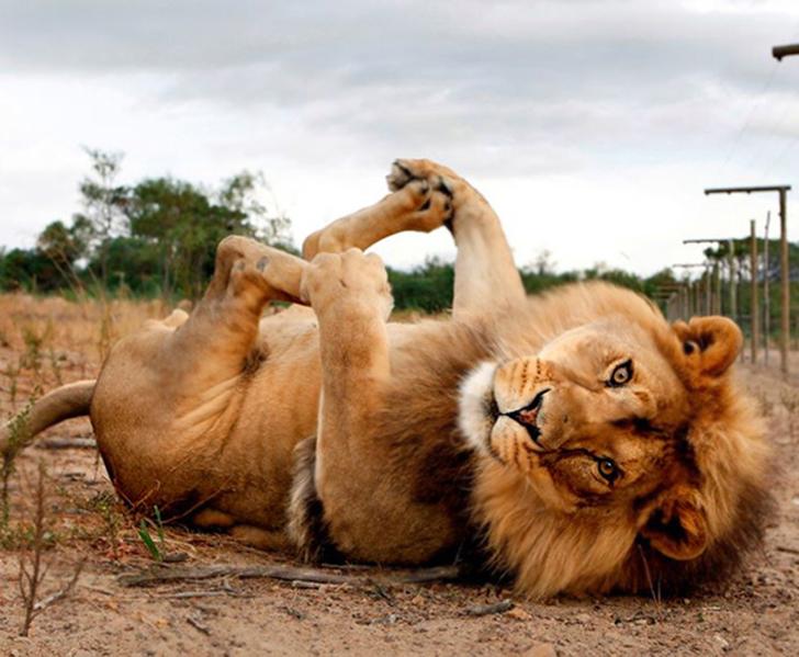 Birbirinden sevimli hayvanlardan yoga pozisyonlari_ 24