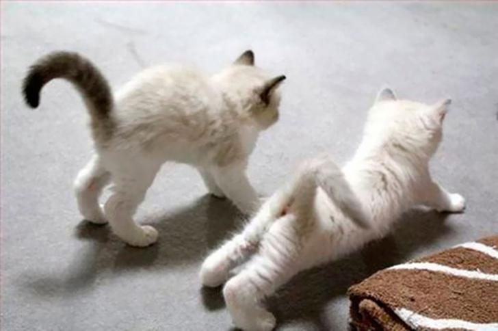 Birbirinden sevimli hayvanlardan yoga pozisyonlari_ 25