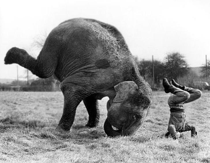 Birbirinden sevimli hayvanlardan yoga pozisyonlari_ 26