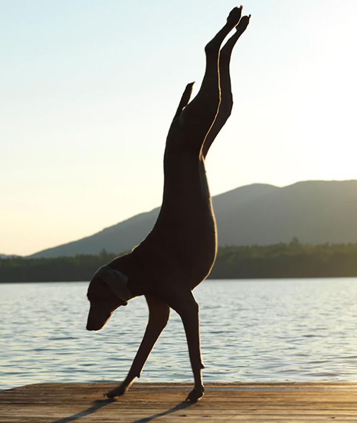Birbirinden sevimli hayvanlardan yoga pozisyonlari_ 30