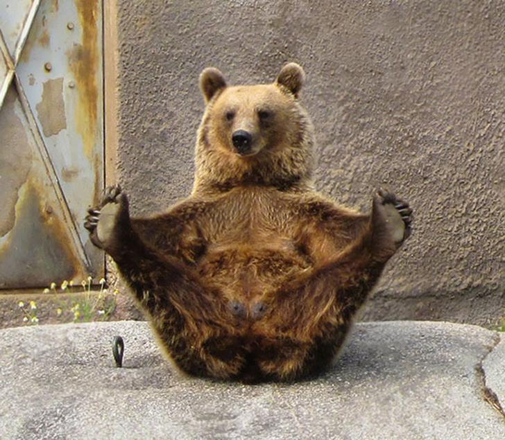 Birbirinden sevimli hayvanlardan yoga pozisyonlari_ 4